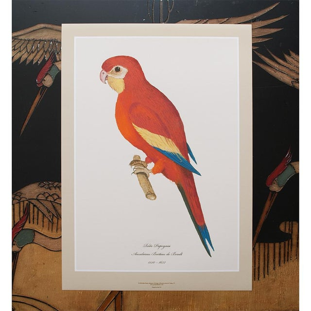 2010s 1590s Large Print of Red Parrot by Anselmus De Boodt For Sale - Image 5 of 7