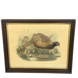 Late 19th Century Antique J. Wolf. & J. Smith Phasianus Colchicus Framed Lithograph Print For Sale