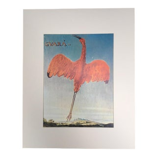 "Albert Eckhout's Scarlet Ibis - 1970s Print of 1644 Painting From ""Birds of Brazil"" For Sale"