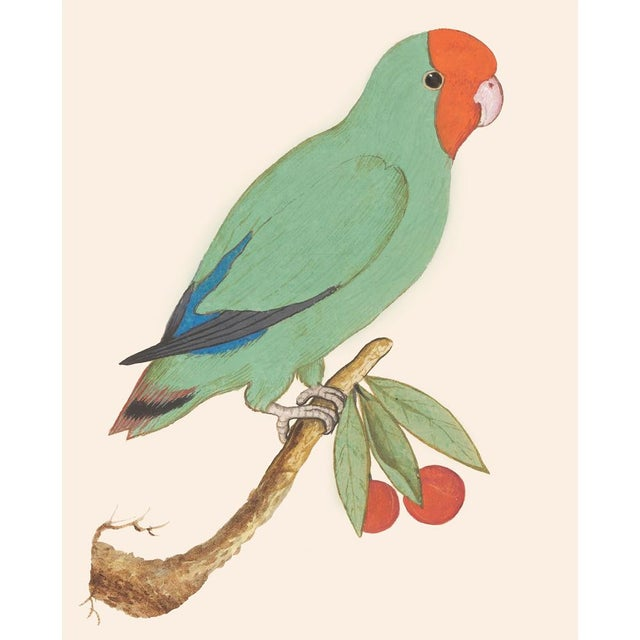 1590s Large Print of Red-Headed Lovebird by Anselmus De Boodt For Sale - Image 4 of 6