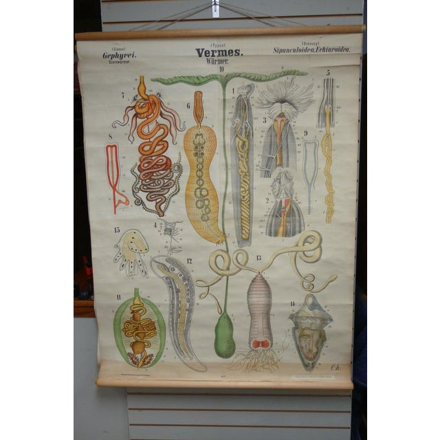 Illustration Midcentury Schoolhouse Print of Worms, Printed in Germany in German For Sale - Image 3 of 13