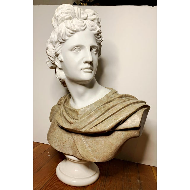Italian Marble Bust of Appollo Belvedere For Sale - Image 11 of 12