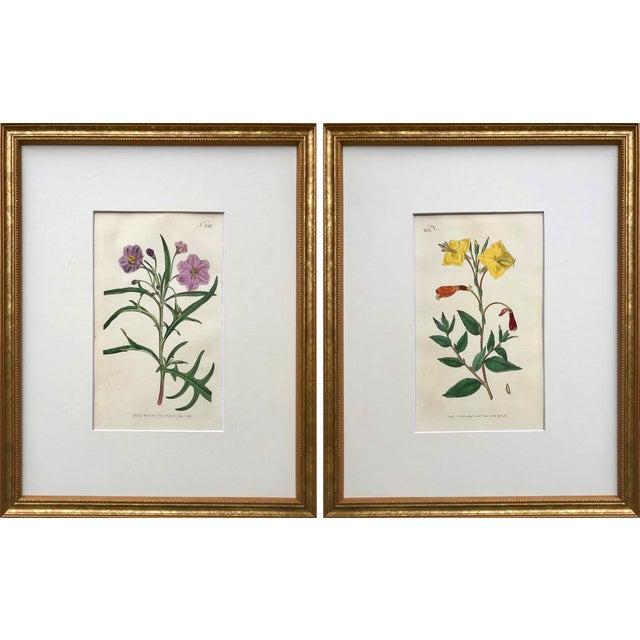 Original Antique Curtis Floral Botanical Etchings C. 1796 - a Pair For Sale