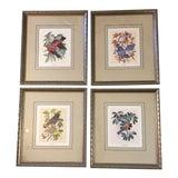 Image of Vintage Earl O Henry Bird Prints - 4 Framed Prints For Sale