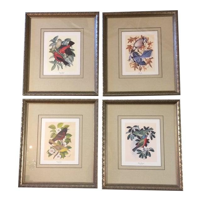 Vintage Earl O Henry Bird Prints - 4 Framed Prints For Sale