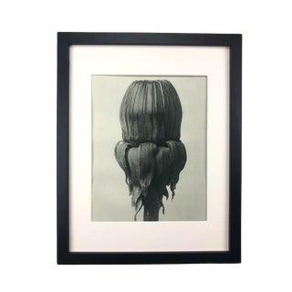 Framed Antique Photogravure Blossfeldt Botanical Print - No. 75 For Sale