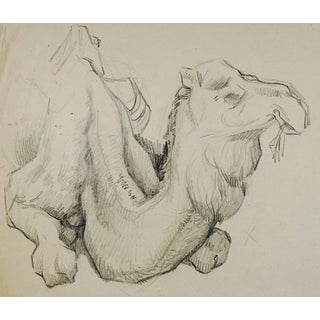 Camel Pencil Study Drawing For Sale