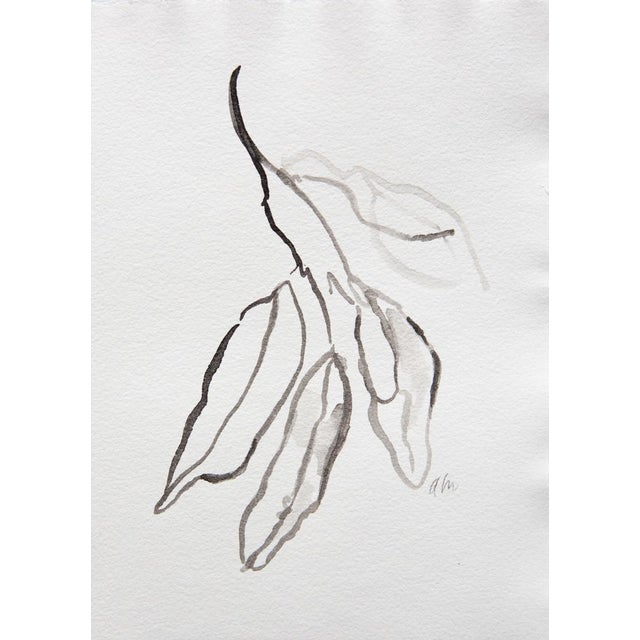 Bay Leaves in Ink Drawing - Image 3 of 3