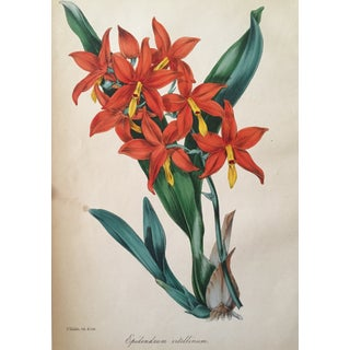 Floral Botanical Color Print 19th Century For Sale