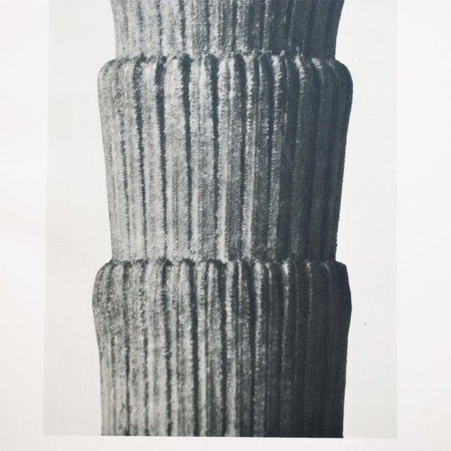 Karl Blossfeldt Two Sided Photogravure N1-2 - Image 4 of 9