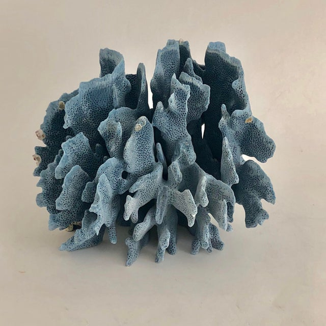Lovely natural Blue Coral fragment with the texture that is in unique to this variety. Cut and polished base to protect...
