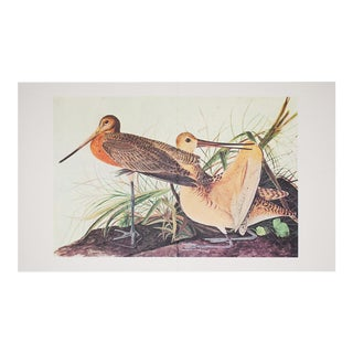 1960s Cottage Style Lithograph of a Great Marbled Godwit by John James Audubon