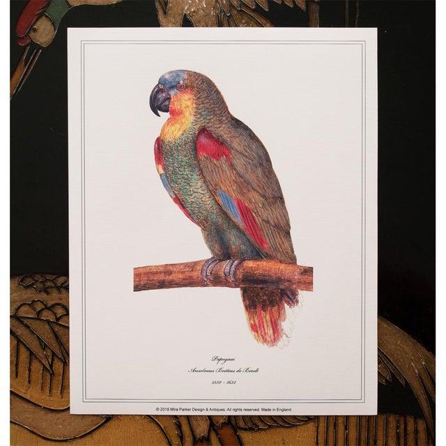 1590s Parrot Set of 3 by Anselmus De Boodt For Sale In Dallas - Image 6 of 10