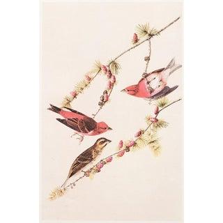 """1966 Cottage """"Purple Finch"""" Lithograph by John James Audubon For Sale"""