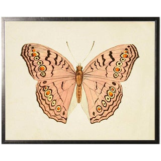 "Horizontal Pink Butterfly in Pewter Shadowbox - 25.5""x19.5"" For Sale"