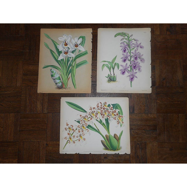 Lithograph Antique 19th Century Orchid Lithographs-Set of 3 For Sale - Image 7 of 7