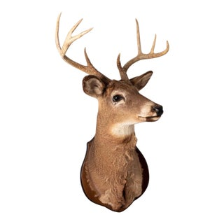 Mounted Stag Taxidermy For Sale