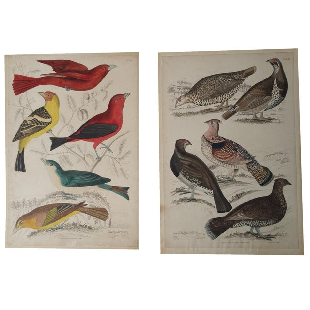 1850s Hand-Colored Bird Etchings - A Pair For Sale