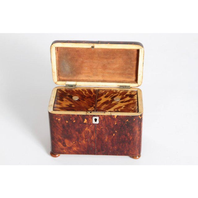 Silver Early 19th Century English Regency Tortoiseshell Tea Caddy For Sale - Image 8 of 13
