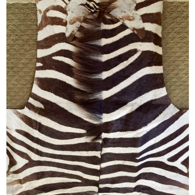 African Burchell Zebra Skin Rug - 5′10″ × 8′9″ - Image 3 of 4