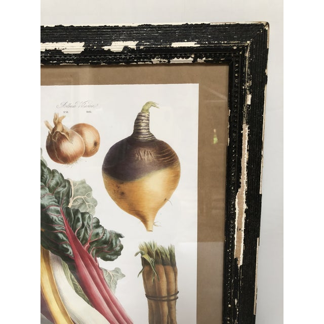 Vintage French Botanical Prints in Rustic Wood Frames - a Pair For Sale - Image 11 of 13