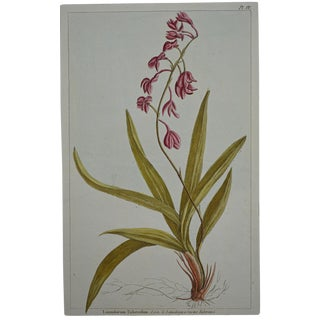 "Rare 18th Century Hand Colored Botanical Engraving Plate IV From ""Jardin D'Eden"" by Pierre Joseph Buchoz For Sale"