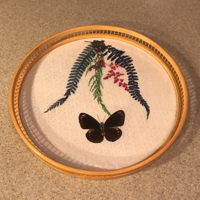Butterfly Specimen Tray & Coaster Set - Image 3 of 11
