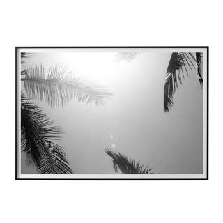 """""""Palm Frames #5"""" Unframed Photographic Print For Sale"""