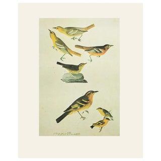 1966 Warblers by John James Audubon Vintage Cottage Print For Sale