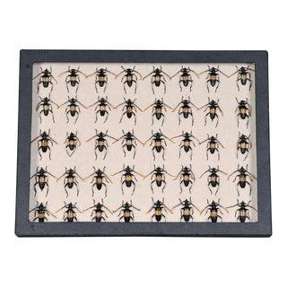Sarreid Ltd. Black Collection Box, Beetles For Sale