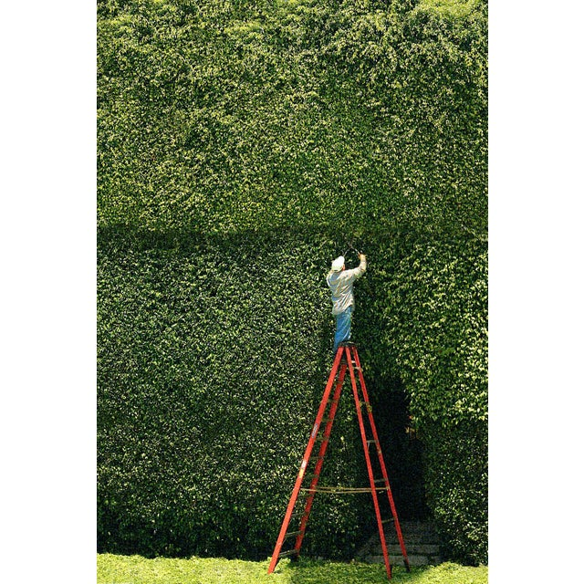 """The Hedge Clipper"" Photograph For Sale"