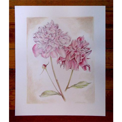 Peonies Original Mixed Media Drawing by Kathleen Ney For Sale - Image 4 of 6