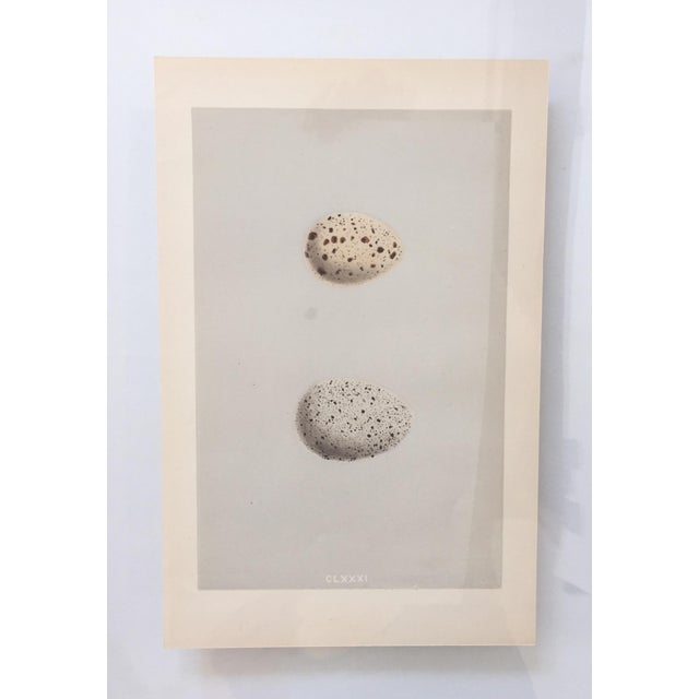 Contemporary Framed Antique Morris Egg Prints - A Pair For Sale - Image 3 of 8