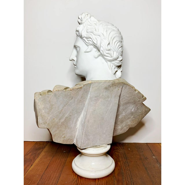Italian Marble Bust of Appollo Belvedere For Sale - Image 10 of 12