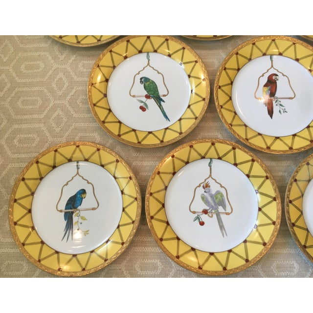 Mid 20th Century Chelsea House Decorative Tropical Bird Parrot Plates - Set of 8 For Sale - Image 5 of 10
