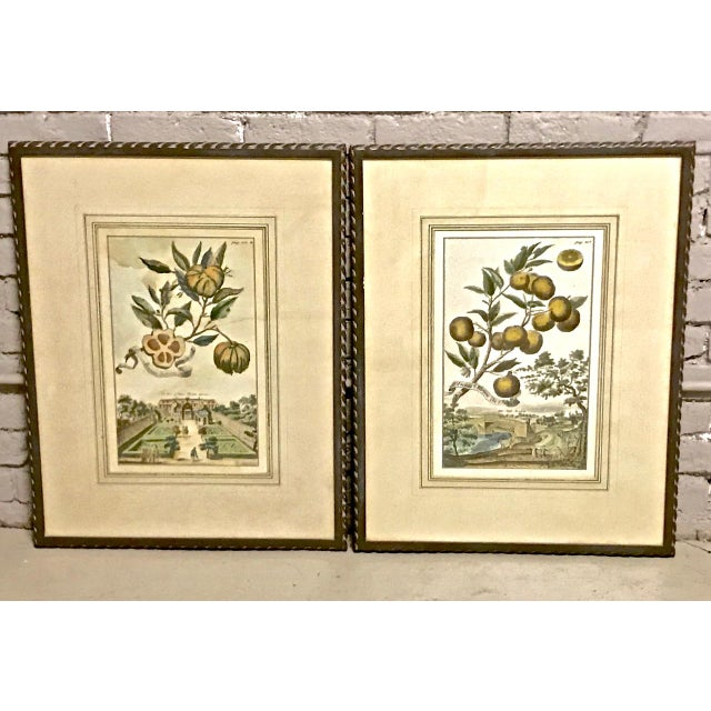 18th Century Antique Volkhammer Botanical Engravings - A Pair For Sale - Image 12 of 12