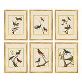 Image of Vintage Framed Martinet Birds. Hummingbirds and Friends Set - Set of 6 For Sale