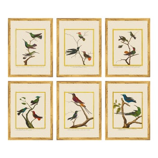 Vintage Framed Martinet Birds. Hummingbirds and Friends Set - Set of 6 For Sale