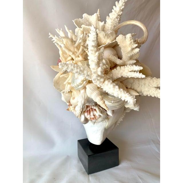Christa's South Seashells Hygiea Shell Head Sculpture For Sale - Image 4 of 8