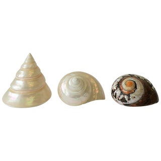Set of 3 Mother-Of-Pearl Sea Shells For Sale