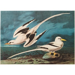 """1966 """"White-Tailed Tropic Bird"""" Lithograph Print by Audubon For Sale"""
