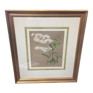 Vintage Botanical Print Denrobium Orchid For Sale