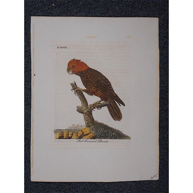 Rustic Antique 18th-Century Bird Engraving For Sale - Image 3 of 3