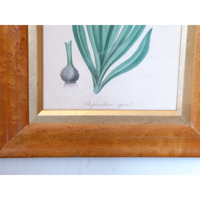 English 19th Century English Spring Flower Print in Maple Frame For Sale - Image 3 of 5
