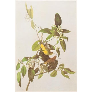 1966 Cottage Lithograph of Yellow Red-Poll Wood-Warbler by John James Audubon