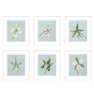"Trowbridge ""Orchids"" Giclees by Meridith Martens Set of Six For Sale"