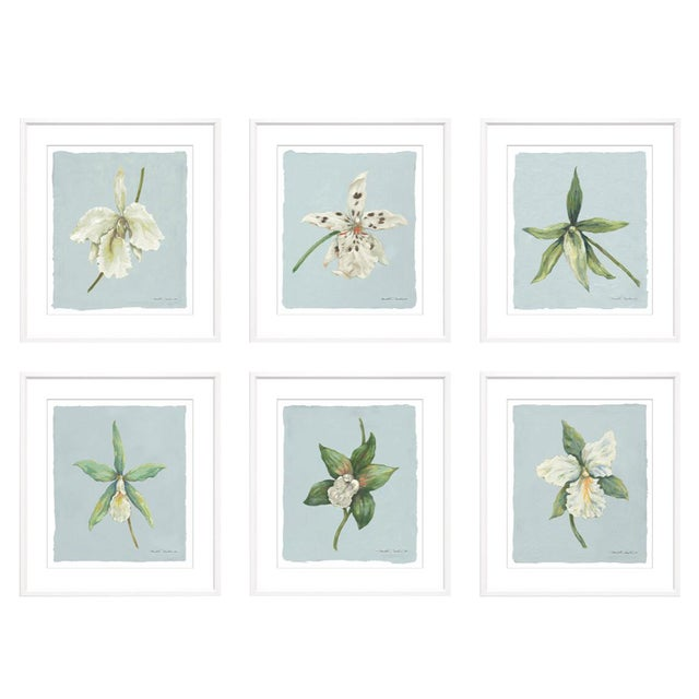 "Trowbridge ""Orchids"" Prints by Meridith Martens - Set of 6 For Sale"