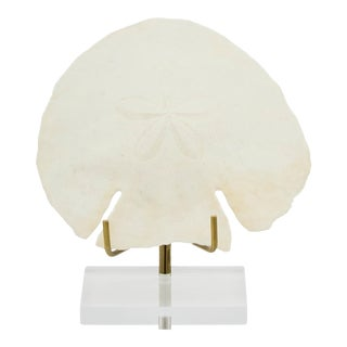 Sand Dollar Natural Shell on Base For Sale