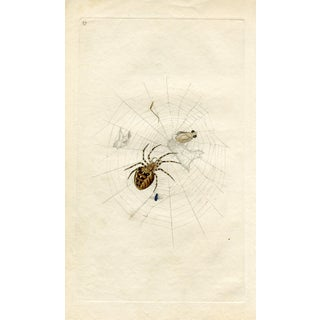 1793 White Cross Spider For Sale