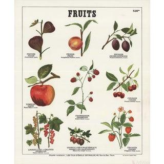 "Emile Deyrolle ""Fruits I"" Lithograph Poster For Sale"